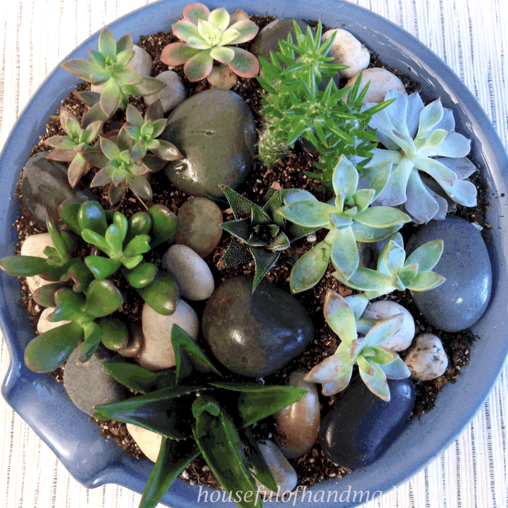 Easy indoor succulent rock garden a houseful of handmade - Best indoor succulents ...