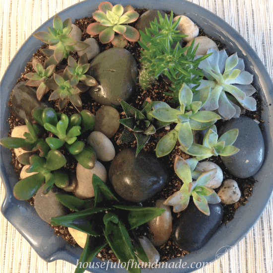 Easy Indoor Succulent Rock Garden