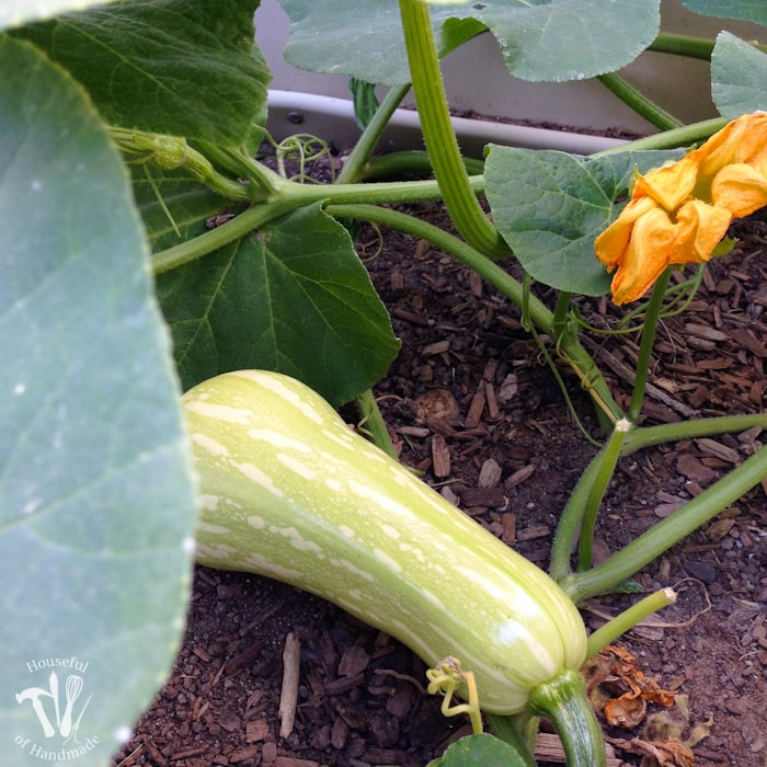 10 Reasons to Plant a Vegetable Garden