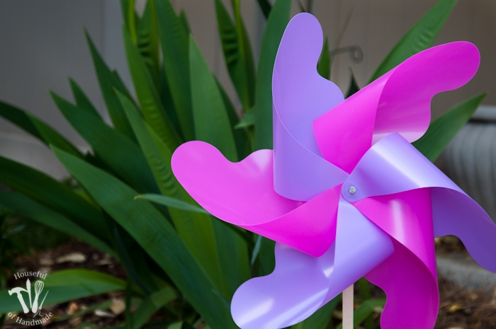 pink and purple pinwheel in garden in front of green plant