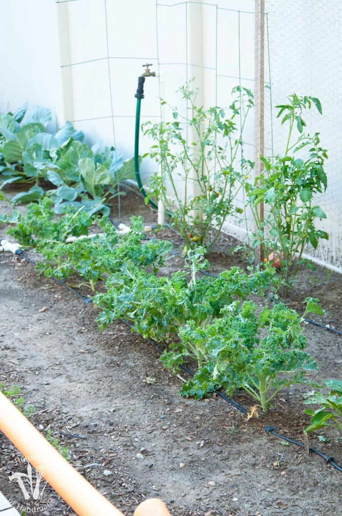 It's been a month since I planted the garden and things are growing. Today I am talking about my favorite fertilizer, tomato supports, and the storm of the century!   Housefulofhandmade.com