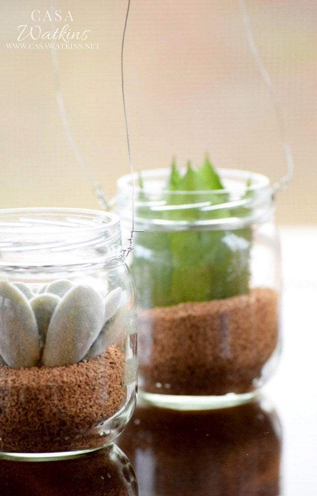 Ways to Upcycle Glass Jars & Bottles: World Market Inspired DIY Mini Succulent Hanging Jars from Casa Watkins Living.