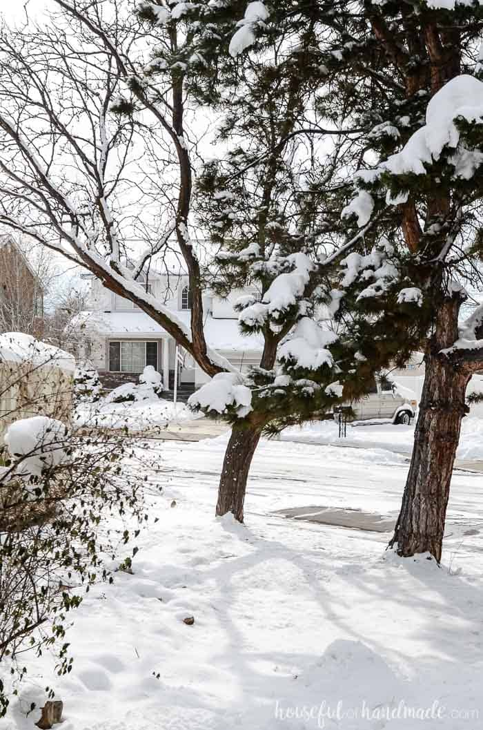 A snow covered yard with two trees. Housefulofhandmade.com