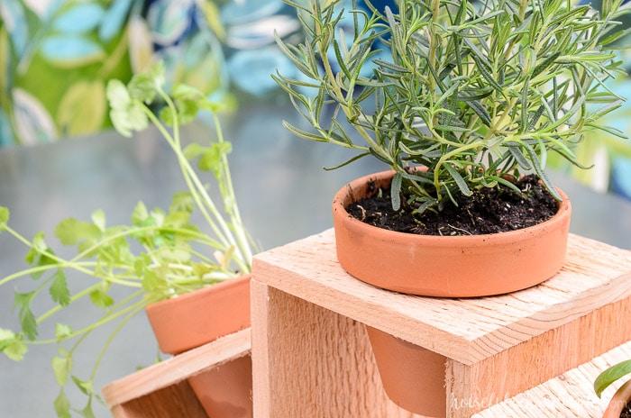 Countertop herb garden made out of a cedar fence picket and terra cotta pots. Housefulofhandmade.com