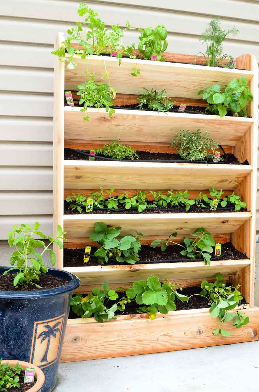 Create a DIY vertical garden for the perfect small space garden solution. This cedar vertical garden has a lot of space to grow your favorite herbs and plants. And the built in drip watering system will help make watering your vertical garden even easier. Housefulofhandmade.com