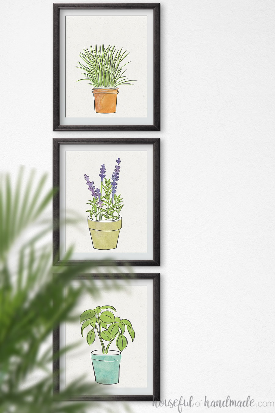 Herb art drawings of chives, lavender and basil in frames on a wall.