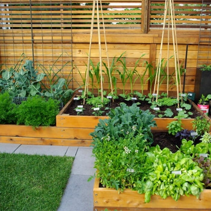 Vegetable Gardening For Beginners Let's Get Started!