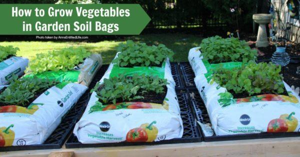 How to Grow Vegetables in Garden Soil Bags