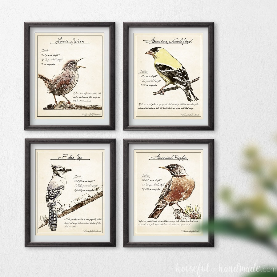 Four art prints that look like vintage bird watching sketches of spring birds.