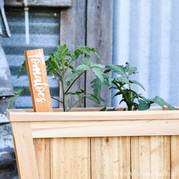 Tomato DIY inlay garden marker made from cedar boards and white acrylic.