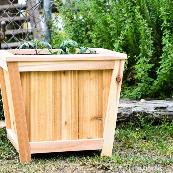 Simple to build wood planter growing tomato plants.