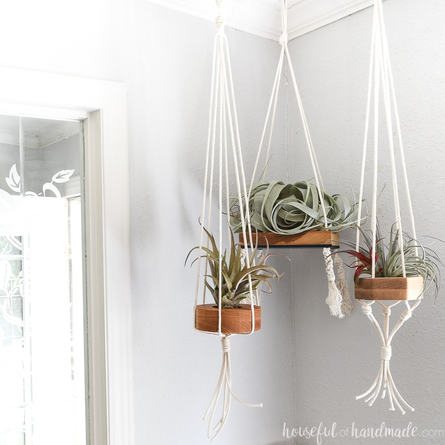 Wood air plant holders hanging with macrame cord holding different types of air plants.