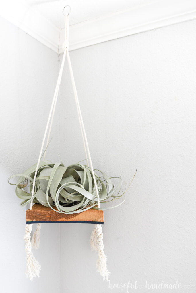 Hickory and navy MDF wood with macrame cording creating an air plant holder.