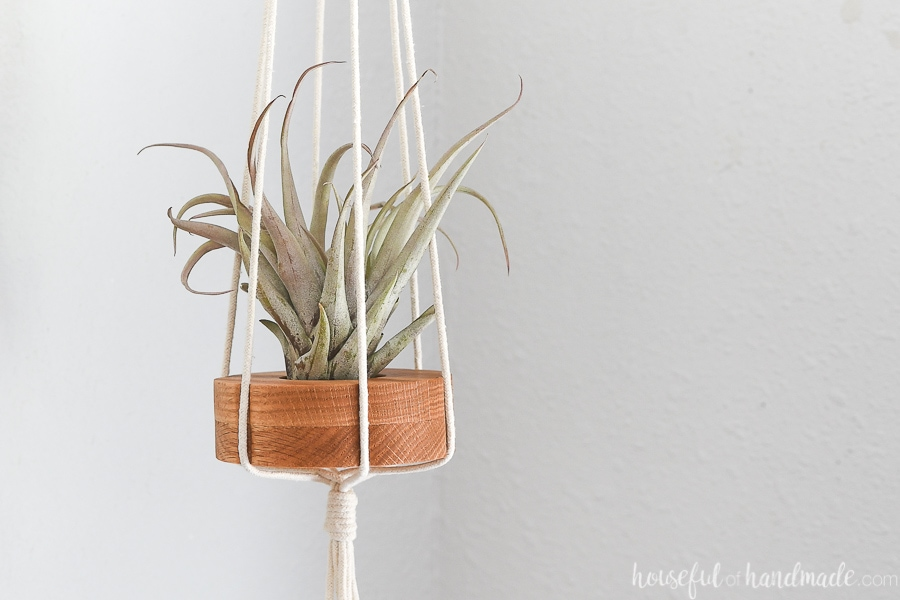 Close up of the flower shaped air plant holder with a capitata peach air plant in it.